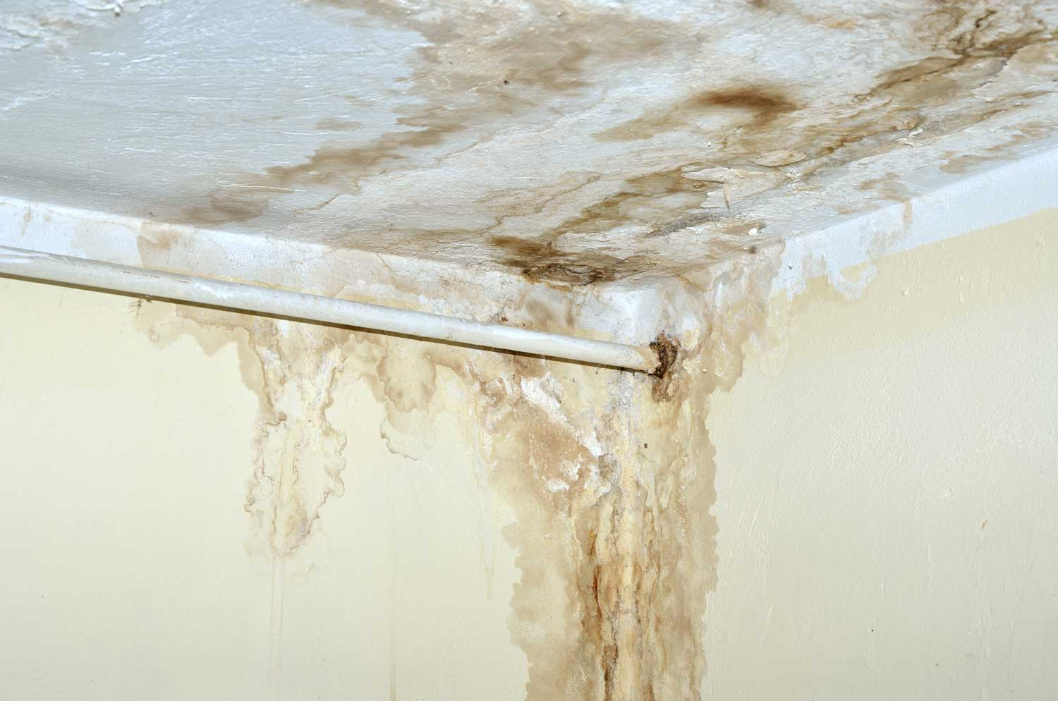 gainesville-mold-removal-services